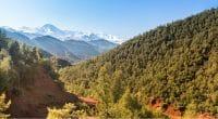 ALGÉRIE : la forêt de Djebel Babor redevient un parc national©LouieLeaShutterstock