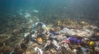 SOUTH AFRICA: Research programme on plastic waste to be launched soon©Fedorova NataliiaShutterstock