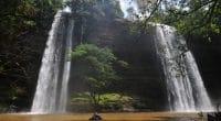 GHANA : la réserve forestière d'Atewa menacée par l'exploitation de la bauxite©Felix Lipov/Shutterstock