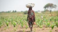 DJIBOUTI : le Pnud signe un accord de financement pour 17 ONG environnementales©mbrand85Shutterstock