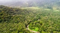 CAMEROON: Key centre for forest conservation in Central Africa©Gustavo FrazaoShutterstock
