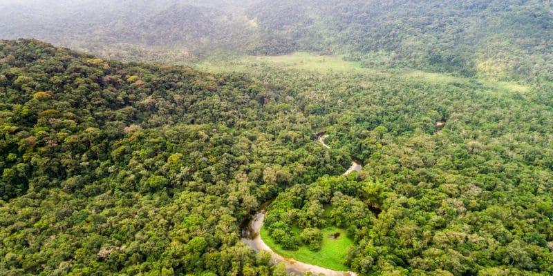 CAMEROUN : centre névralgique de la préservation des forêts d'Afrique centrale©Gustavo FrazaoShutterstock