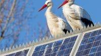 ÉGYPTE : le zoo de Giza sera bientôt alimenté par les énergies renouvelables©MyImages - Micha/Shutterstock