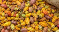 IVORY COAST: USTDA finances cocoa pod-biomass plant©Sylvie Corriveau/Shutterstock