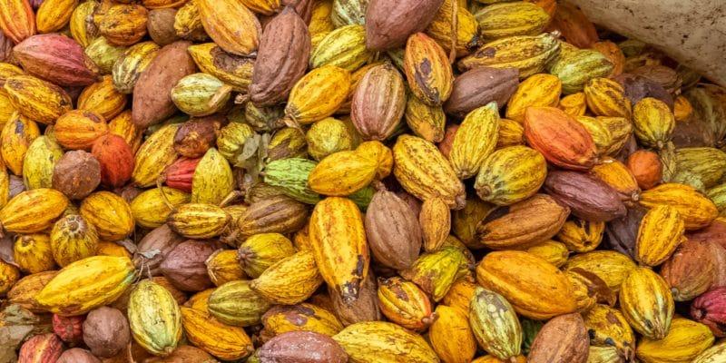 CÔTE D'IVOIRE : l'USTDA finance une centrale à biomasse de cosses de cacao©Sylvie Corriveau/Shutterstock