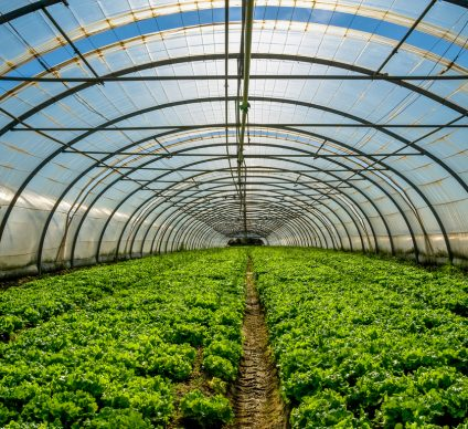EGYPT: Greenhouse agriculture to reduce water consumption©pixinoo/Shutterstock