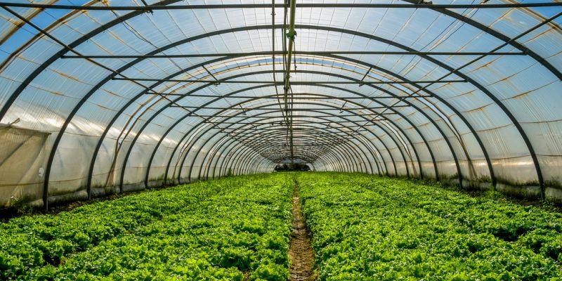 ÉGYPTE : l'agriculture sous serres pour réduire la consommation en eau ©pixinoo/Shutterstock