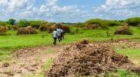 AFRICA: IITA launches agricultural waste-to-fertilizer project©JULIAN LOTT/Shutterstock