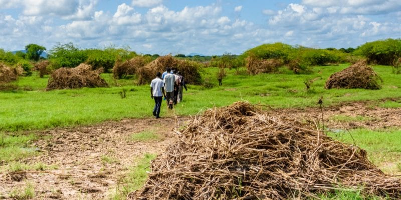 AFRICA: IITA launches agricultural waste-to-fertilizer project©JULIAN LOTT/Shutterstock