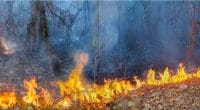 AFRIQUE : Green Peace demande l'arrêt de toute activité dans la forêt équatoriale ©Toa55Shutterstock