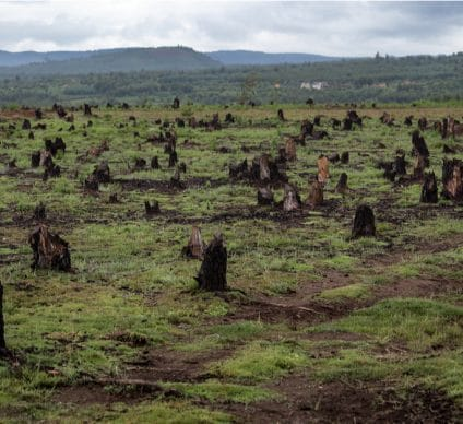 IVORY COAST: Authorities strive to reforest 20% of land by 2040©Dudarev MikhailShutterstock