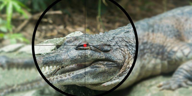 TANZANIE : le gouvernement va abattre 10 % des crocodiles et hippopotames du pays©Somboon Bunproy/Shutterstock
