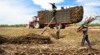ÉGYPTE : la start-up Baramoda transforme les déchets agricoles en engrais biologique©Tran Thanh Sang/Shutterstock