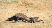 AFRIQUE DE L'EST : l'Union européenne accorde une aide de 56 M$ contre la sècheresse©THPStockShutterstock