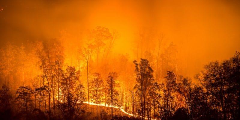 AFRIQUE : le couvert végétal part en fumée©anthony heflinShutterstock