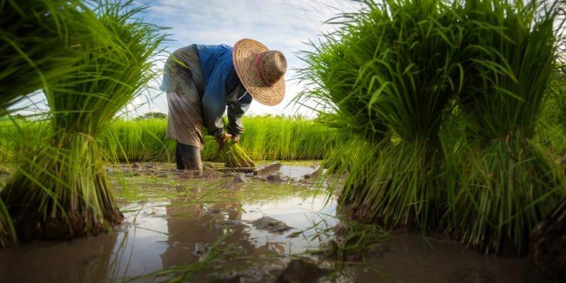 EGYPT: Farmers along Nile Basin to reduce water consumption ©©Jen Watson/Shutterstock/Shutterstock