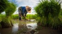 ÉGYPTE : les agriculteurs du bassin du Nil vont réduire leur consommation en eau©Tong_stocker/Shutterstock