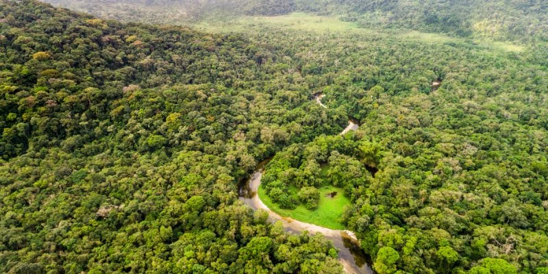DR CONGO: EU reiterates its support for biodiversity protection ©Gustavo FrazaoShutterstock