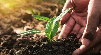 ETHIOPIA: Over 350 million trees planted in 12 hours©lovelyday12