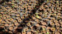 MALI: Population plant 2100 trees in Niamala, southern Mali ©Dennis WegewijsShutterstock