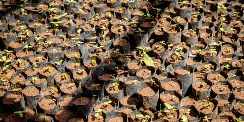 MALI : les populations plantent 2100 arbres à Niamala dans le sud du pays©Dennis WegewijsShutterstock