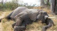 CAR: Pygmy hunters turn into elephant protectors