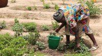 COP25 : prévenir et s'adapter aux désastres climatiques, une priorité pour l'Afrique©BOULENGER XavierShutterstock