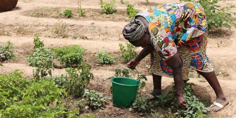 BURKINA FASO : Mathieu Ouedraogo, honoré à la COP14 pour sa technique culturale©BOULENGER XavierShutterstock