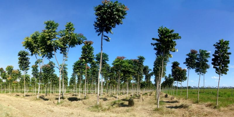 NIGERIA: 25 million trees will be planted to absorb CO²©Tarcisio SchnaiderShutterstock