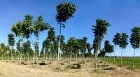 NIGERIA : 25 millions d'arbres seront plantés pour capter le CO2©Tarcisio SchnaiderShutterstock