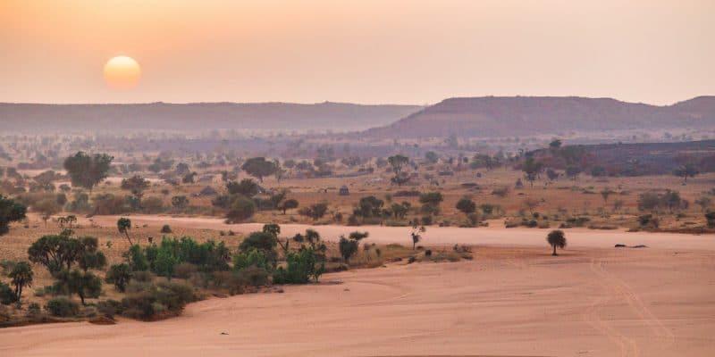 MALI : l'opération Koula vert pour reboiser et lutter contre l'avancée du désert©Madalin OlariuShutterstock