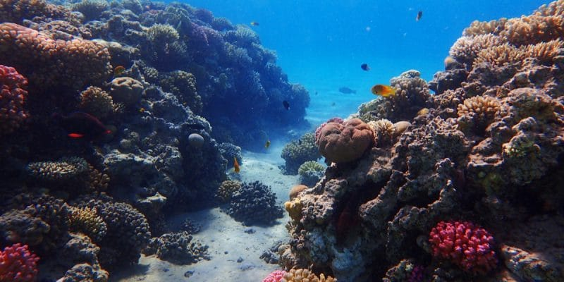MADAGASCAR: Japan provides $4.4 million for coral reef conservation©Jiri VaclavekShutterstock