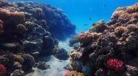 MADAGASCAR : le Japon débloque 4,4 M$ pour la préservation des récifs coralliens