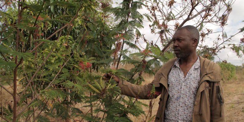 TOGO : la FAO mobilise près de 135000 euros pour l'agroécologie©James KarugaShutterstock