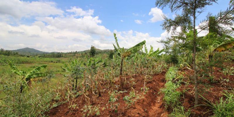 CEDEAO : Expertise France lance un appel à projets pour une agriculture résiliente©littleartvectorShutterstock