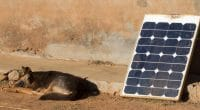 AFRICA: Bboxx raises $50 million for solar home kits distribution©MyImages - Micha/Shutterstock