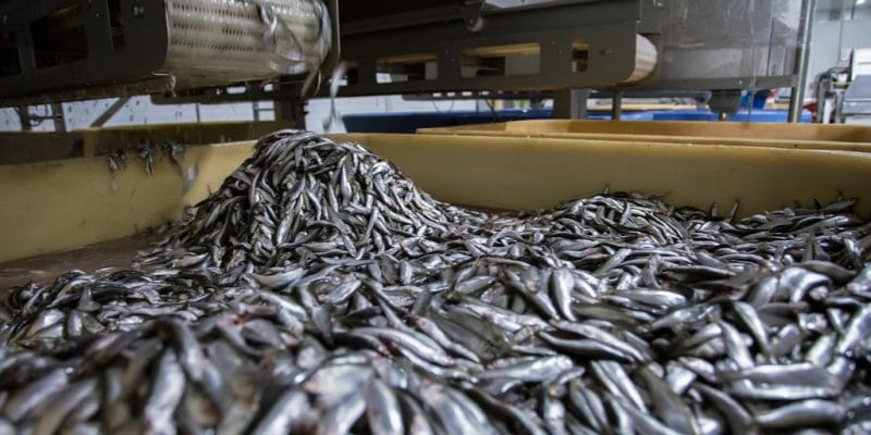 WEST AFRICA: Greenpeace calls for fishmeal plants to be shut down© Borkin VadimShutterstock