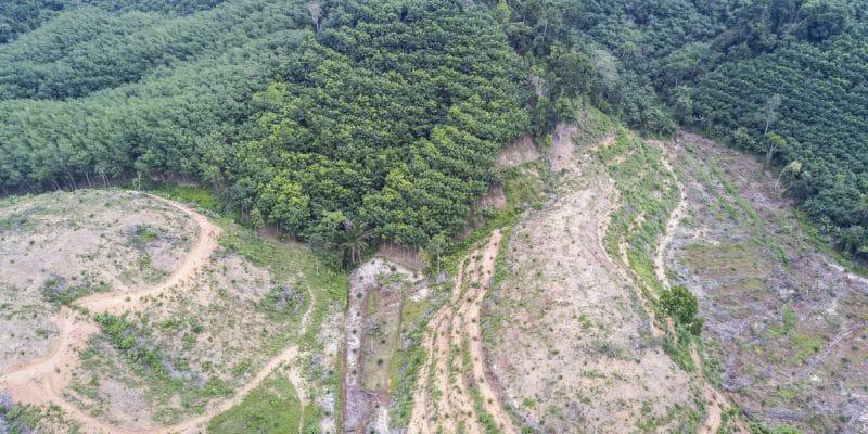 AFRIQUE CENTRALE : les États défendent d'une même voix la préservation des forêts© Rich CareyShutterstock