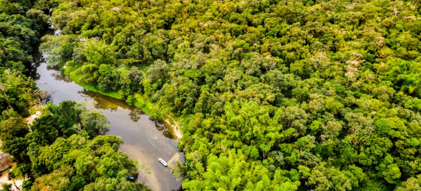 CENTRAL AFRICA: CAFI releases $65 million for forest conservation in Congo©Gustavo FrazaoShutterstock
