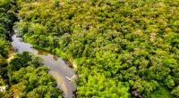 AFRIQUE CENTRALE : la Cafi débloque 65 M$ pour la préservation de la forêt congolaise©Gustavo FrazaoShutterstock