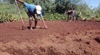 IVORY COAST: Biosave, an application to promote biofertilizer production©RadodoShutterstock