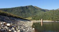 ALGÉRIE : 2,2 millions d'arbres ont été plantés pour protéger les ressources en eau©MD_PhotographyShutterstock