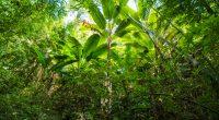 IVORY COAST: Work underway to rehabilitate Tagro Forest©Sittitap