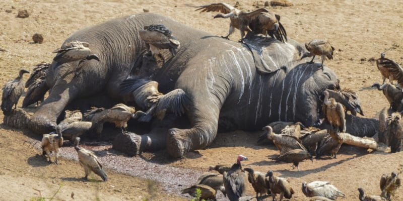 BOTSWANA: Over 100 elephants die of hunger and thirst due to drought©Martina Wendt/Shutterstock