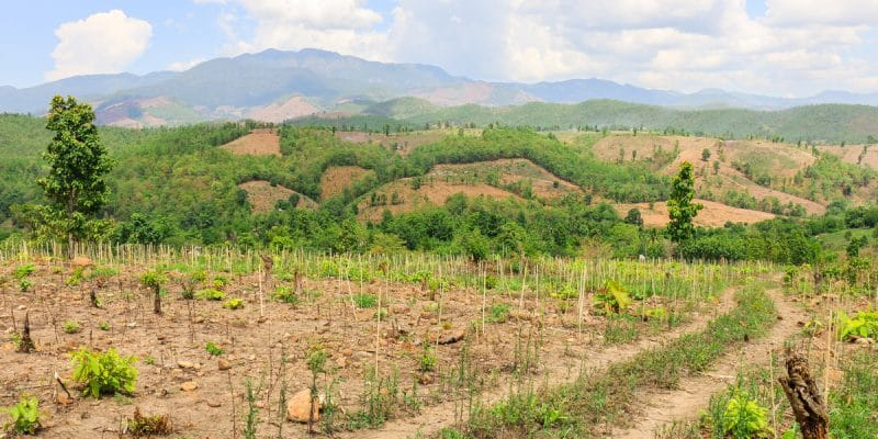ALGÉRIE : 43 millions d'arbres, pour la dernière phase du plan national de reboisement©Sukrit.KShutterstock