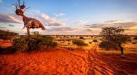 NAMIBIE : le FVC investit 8,4 M$ pour la résilience au changement climatique ©Thomas Noitz/Shutterstock