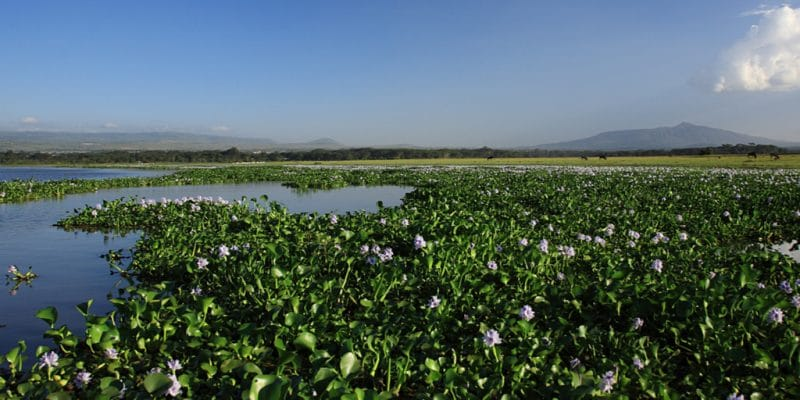 KENYA: Moscow supports action against water hyacinth on Lake Victoria©Deborah Benbrook/Shutterstock