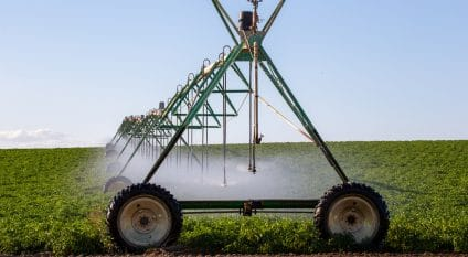 EGYPT: Government to launch more water-efficient irrigation system© fagianellaz/Shutterstock