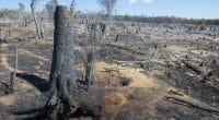 AFRIQUE : l'algorithme de l'IRD révèle que 32 % des plantes tropicales sont menacées©KRISS75Shutterstock