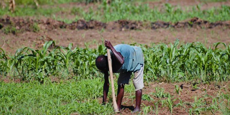 MAROC : l'initiative AAA signe trois accords pour l'agriculture résiliente en Afrique©AdwoShutterstock